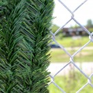 3' Chain Link Fence Forevergreen Hedge Slats