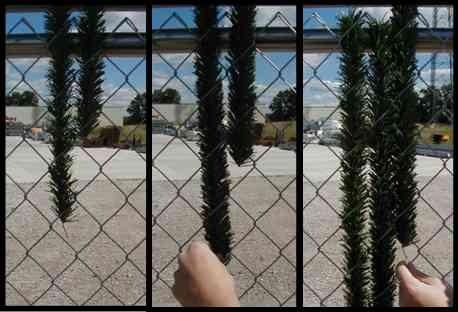 4 Chain Link Fence Dura Hedge Privacy Slats Privacy